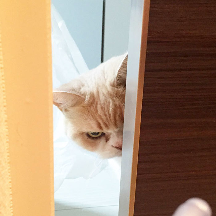 The Japanese cat. Meet Japanese Grumpy Cat, Who Is Even Grumpier Than The Original One