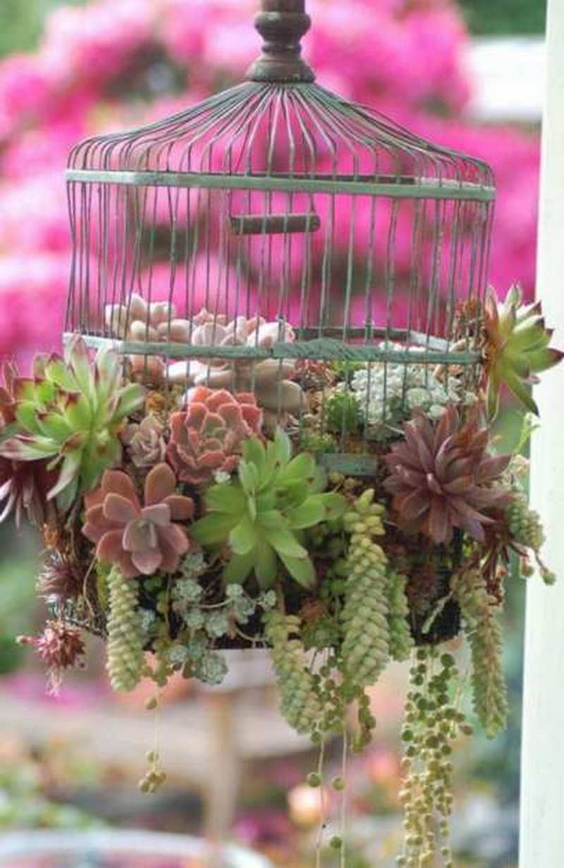 Old Bird cage can be used to grow succulents